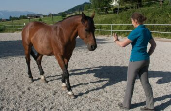 horsemanship-kern