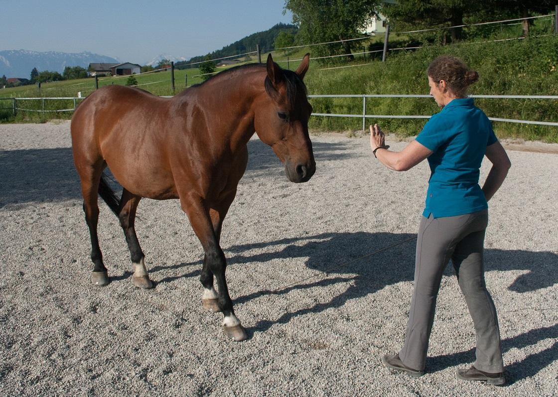 Horsemanship - die Sprache der Pferde verstehen und sprechen lernen